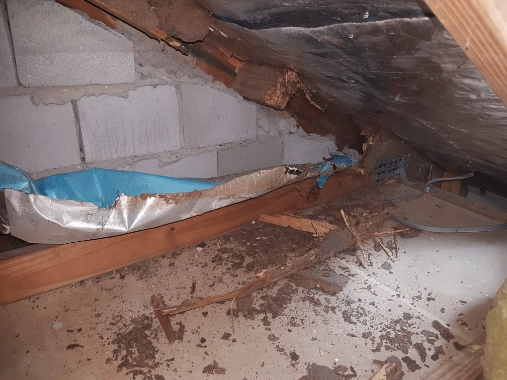 termite damage to roof trusses