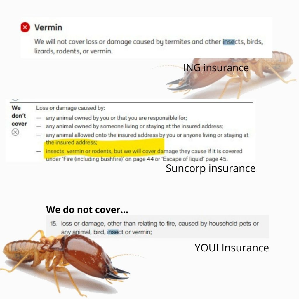 insurance coverage of termites