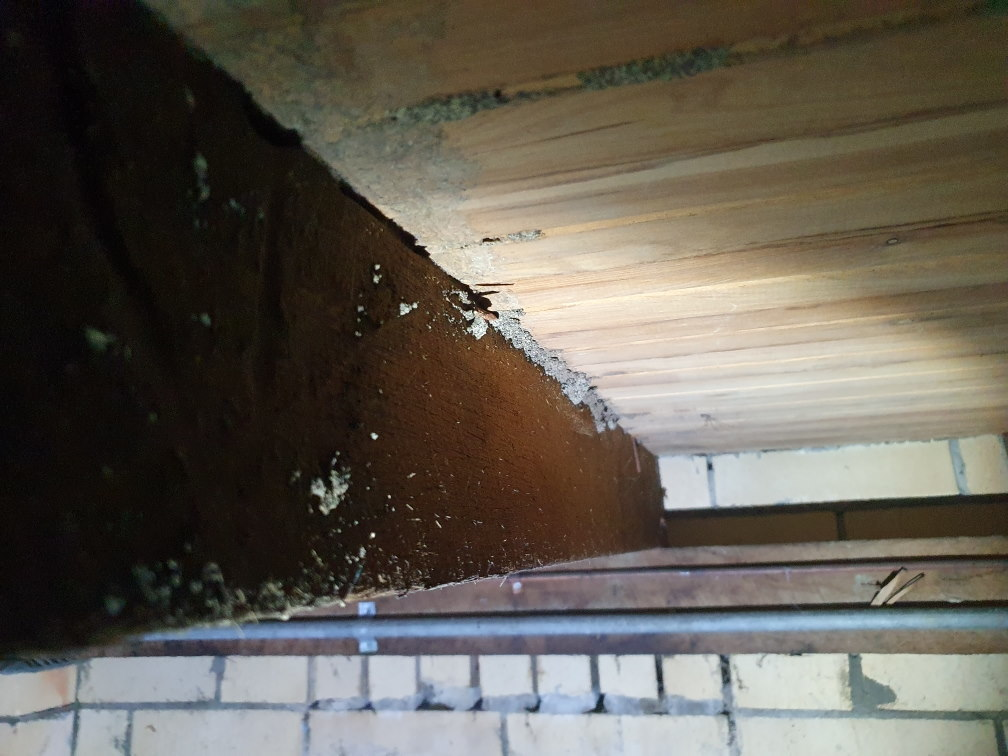 Termite mudding in a subfloor missed by another company 1 month ago
