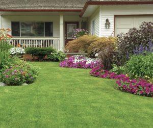 Keep garden termite free