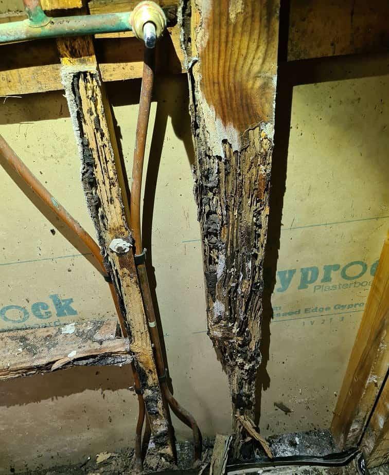 bathroom termite damage 2