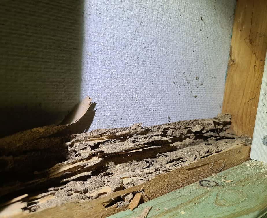 same home more termite damage