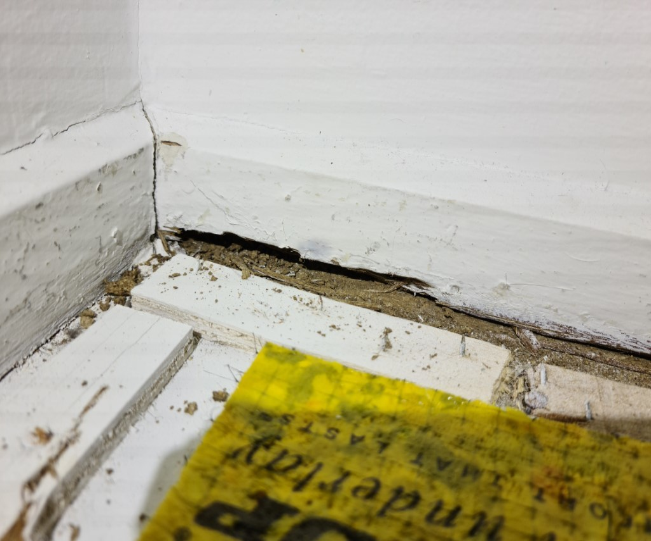 Evidence under carpet tuesday (Medium)