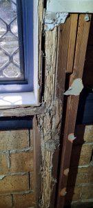 termite damage to studs in a brick home