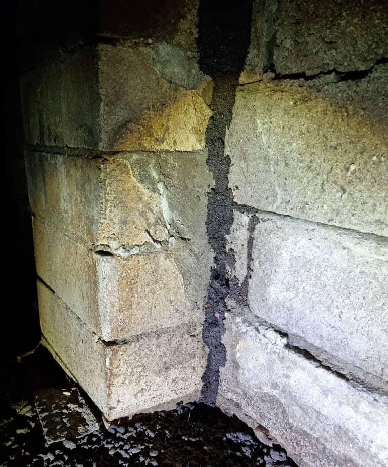 Termite lead in subfloor sm