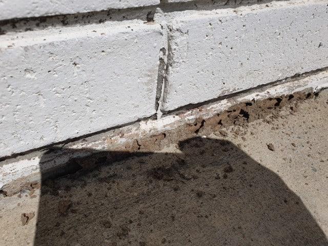 termite mudding on brickwork of house